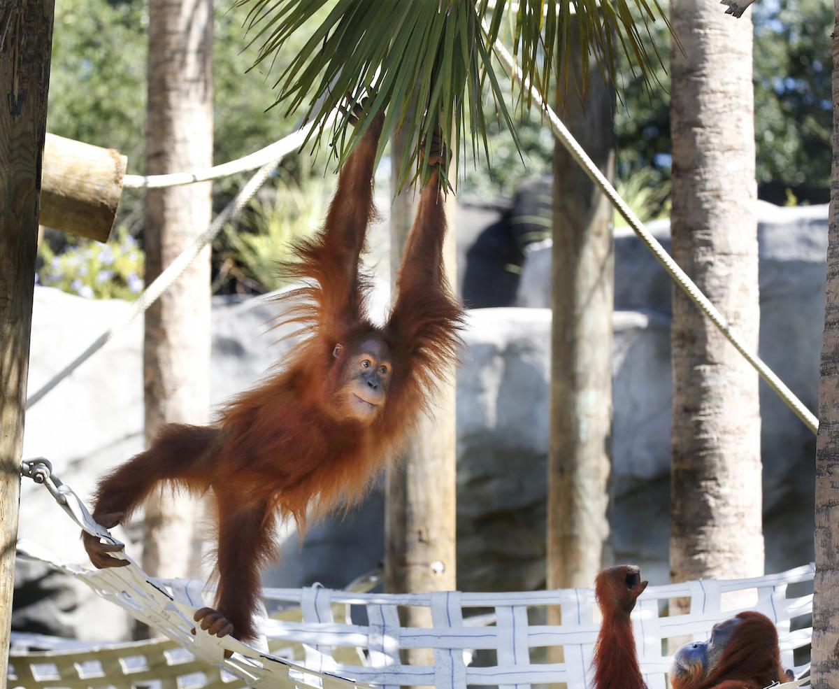 Audubon Nature Institute Zoo
