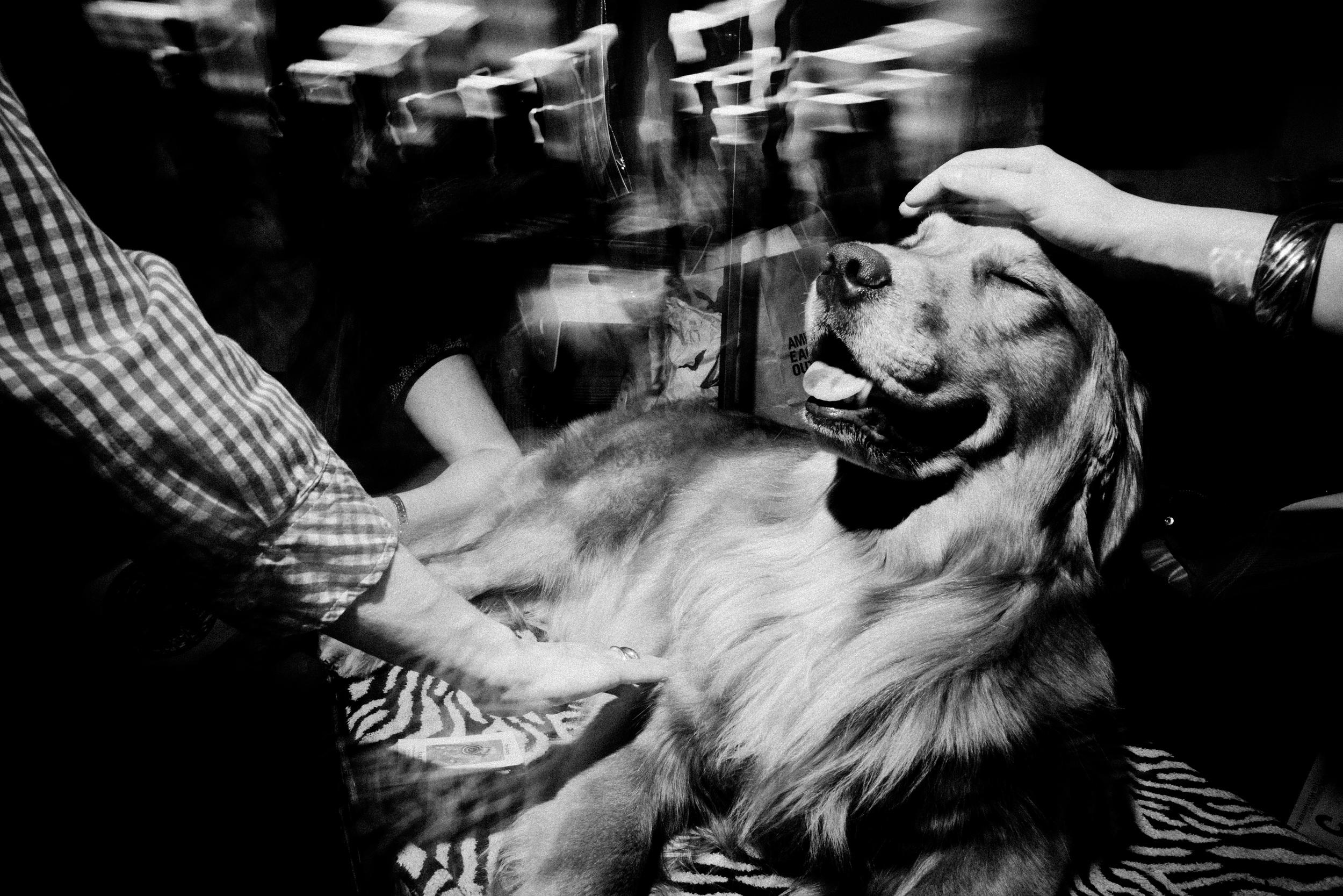 westmins_dog2012-0235.jpg