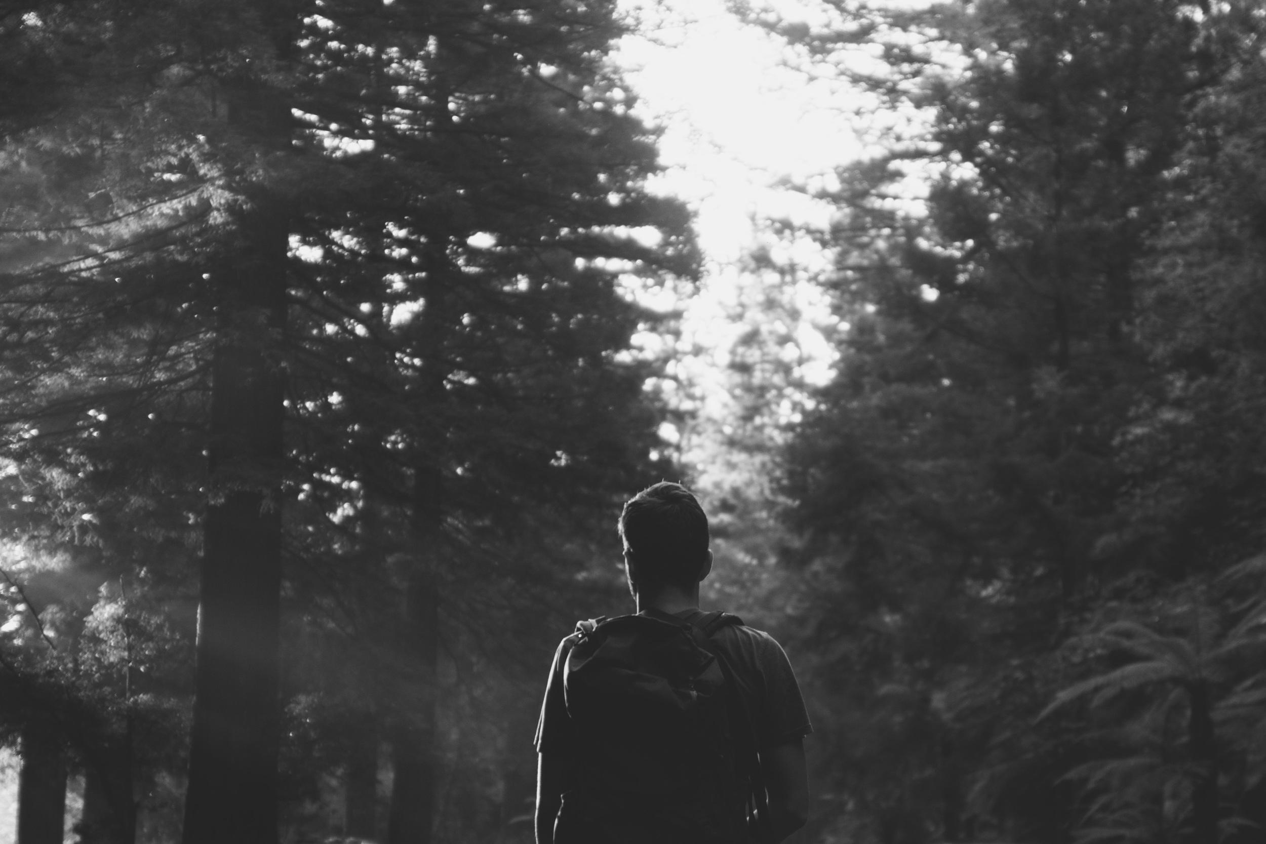 Redwoods-nz2014