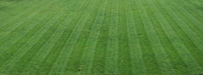 A perfect fescue lawn