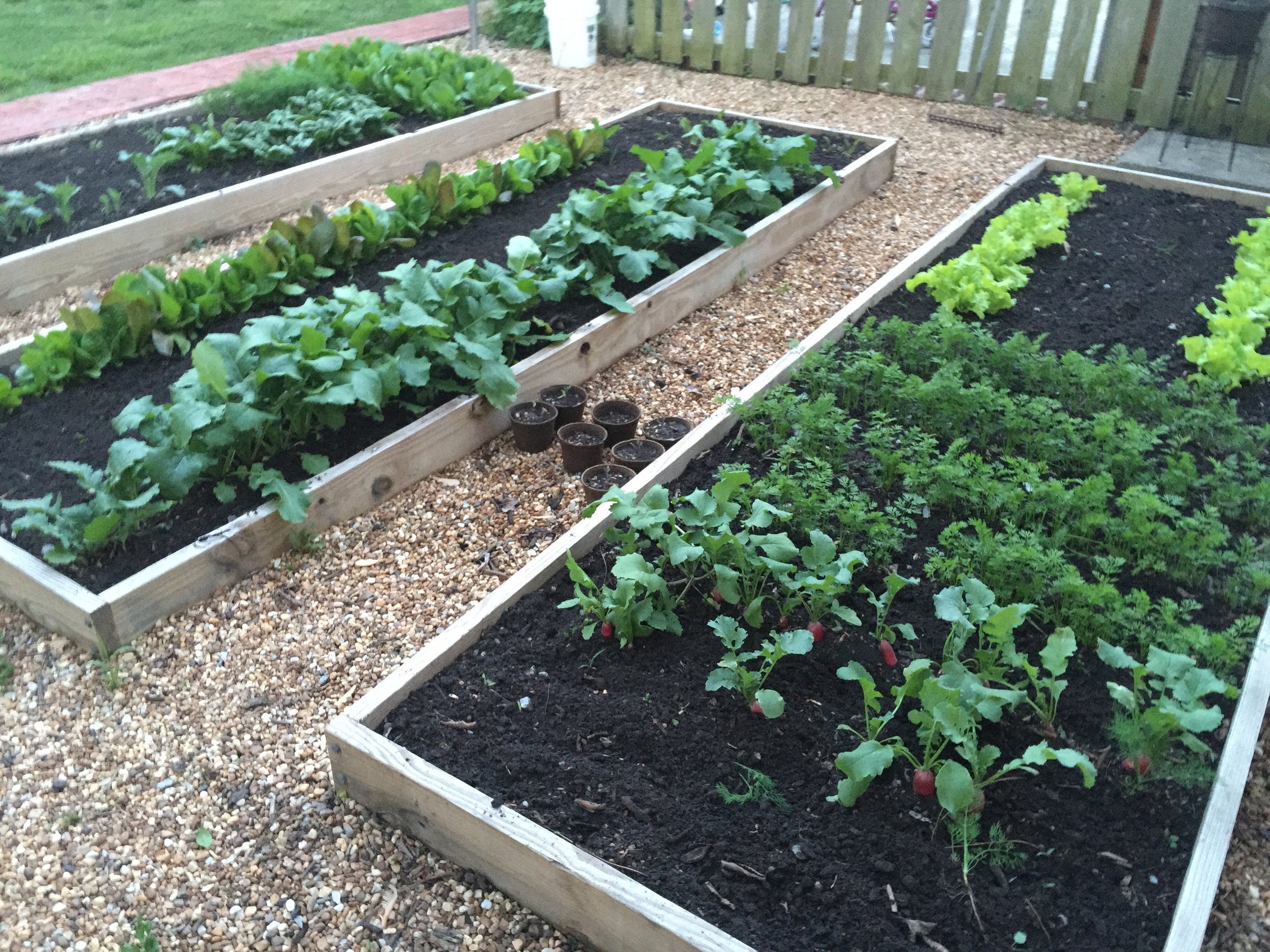 Raised planting beds constructed from 2x8 lumber