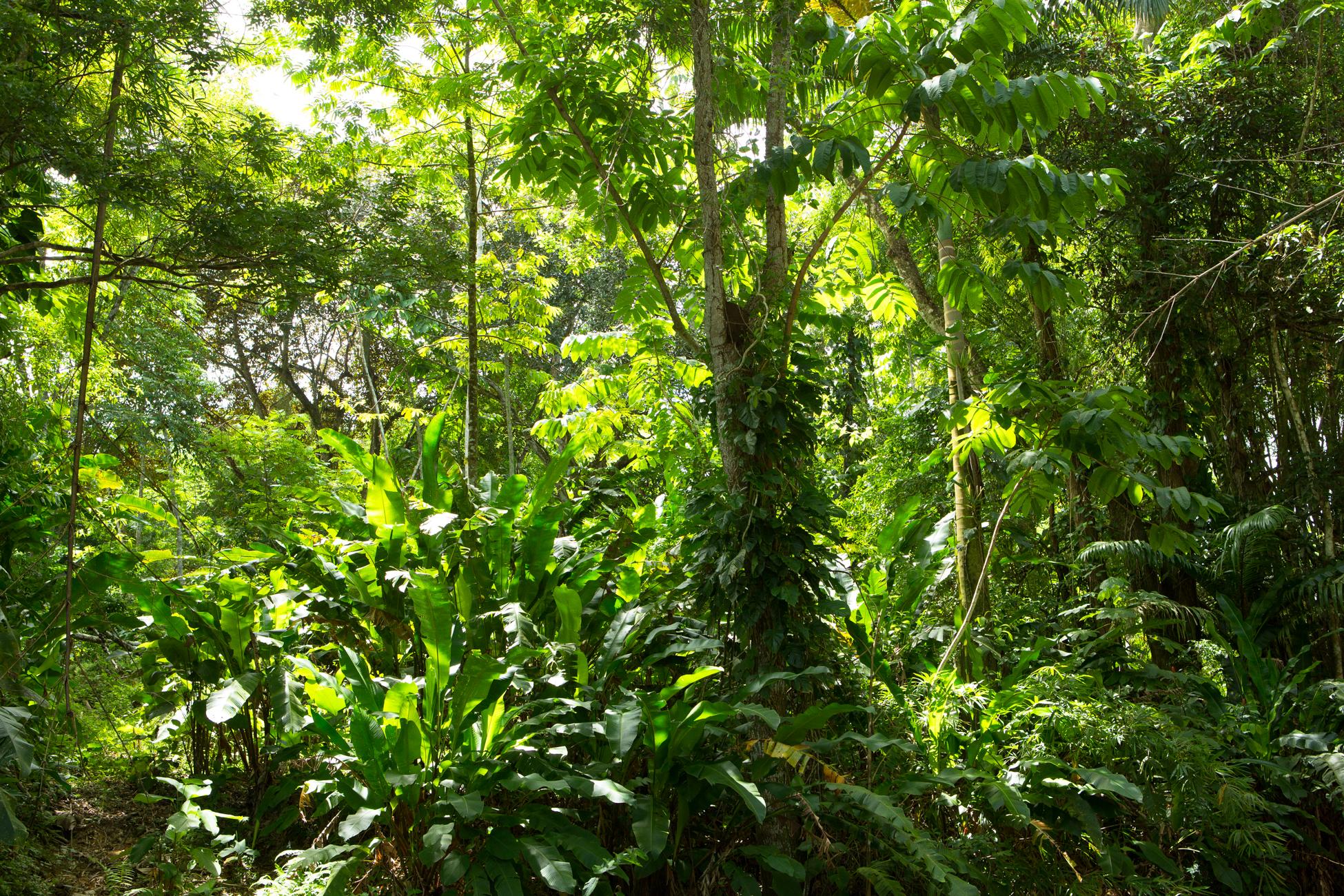 Jungle I, 2013 //  80 cm x 120 cm
