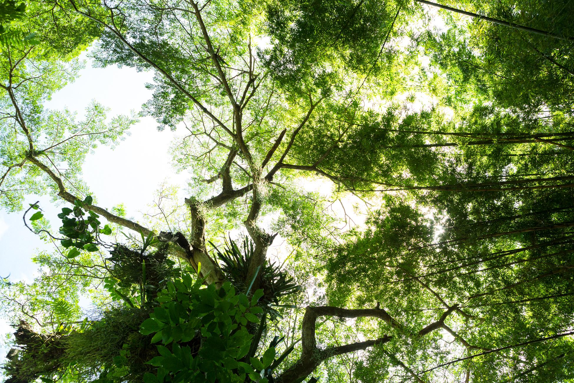 Jungle IV, 2013 //  80 cm x 120 cm