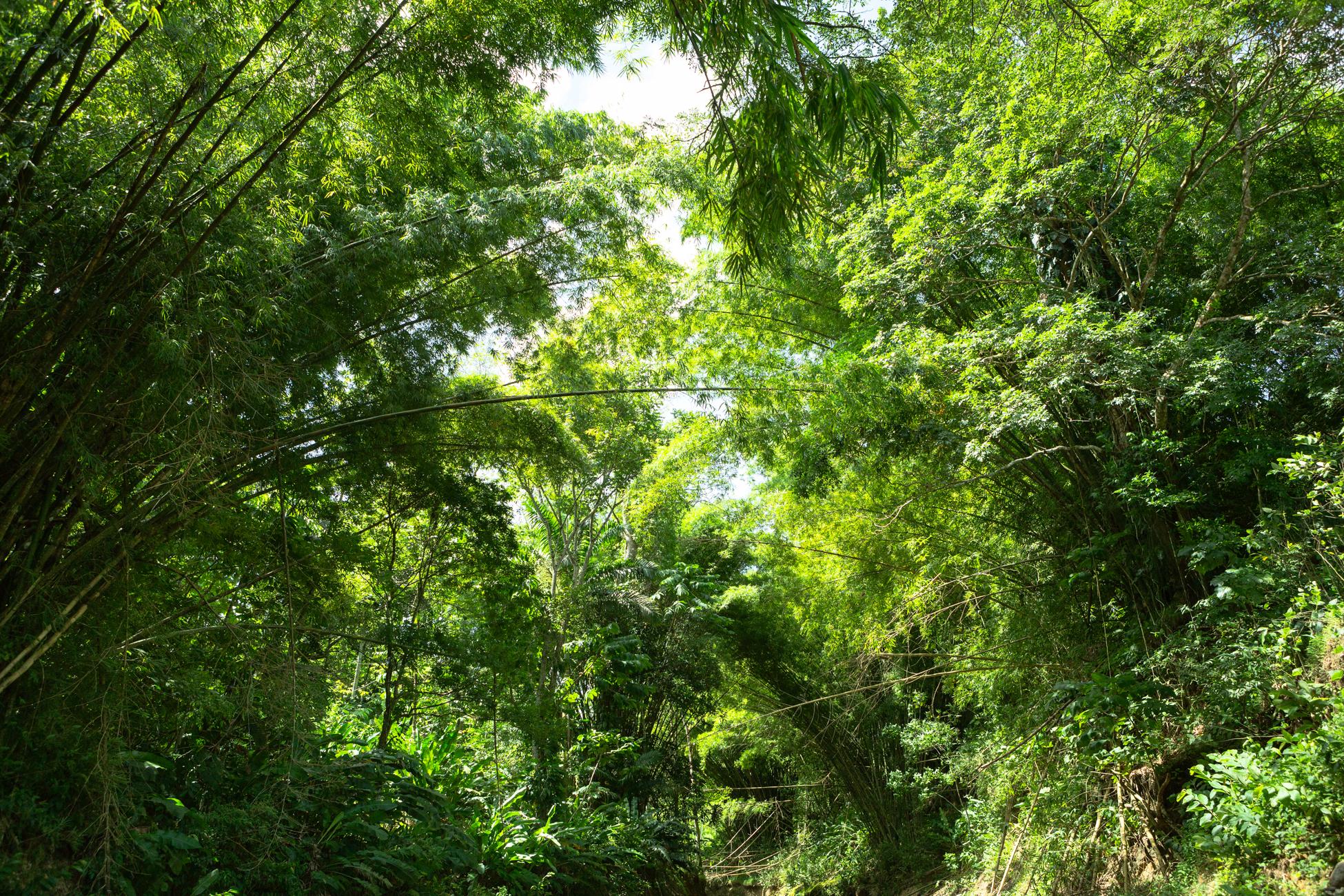 Jungle V, 2013 //  80 cm x 120 cm