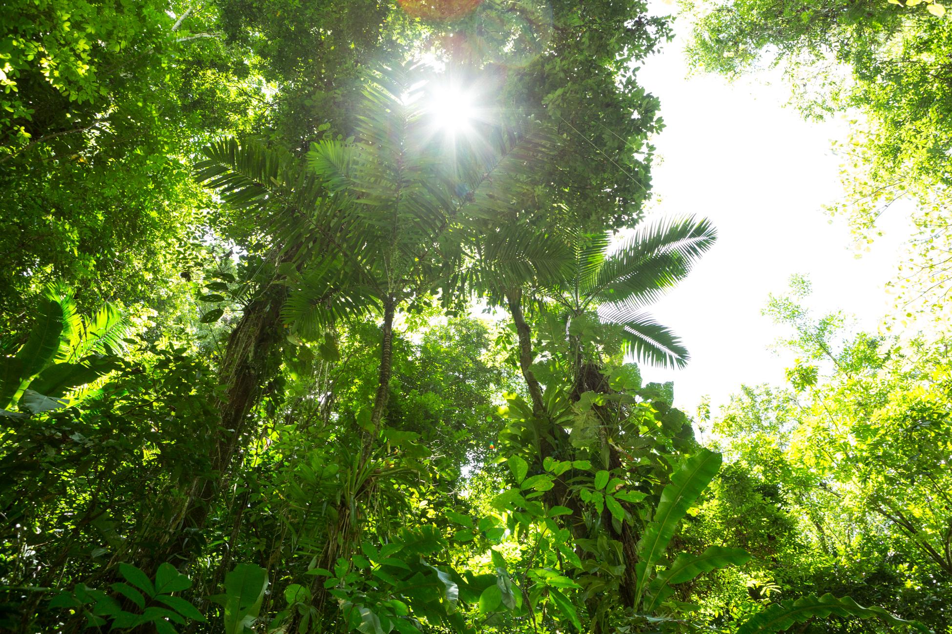 Jungle VI, 2013 //  80 cm x 120 cm