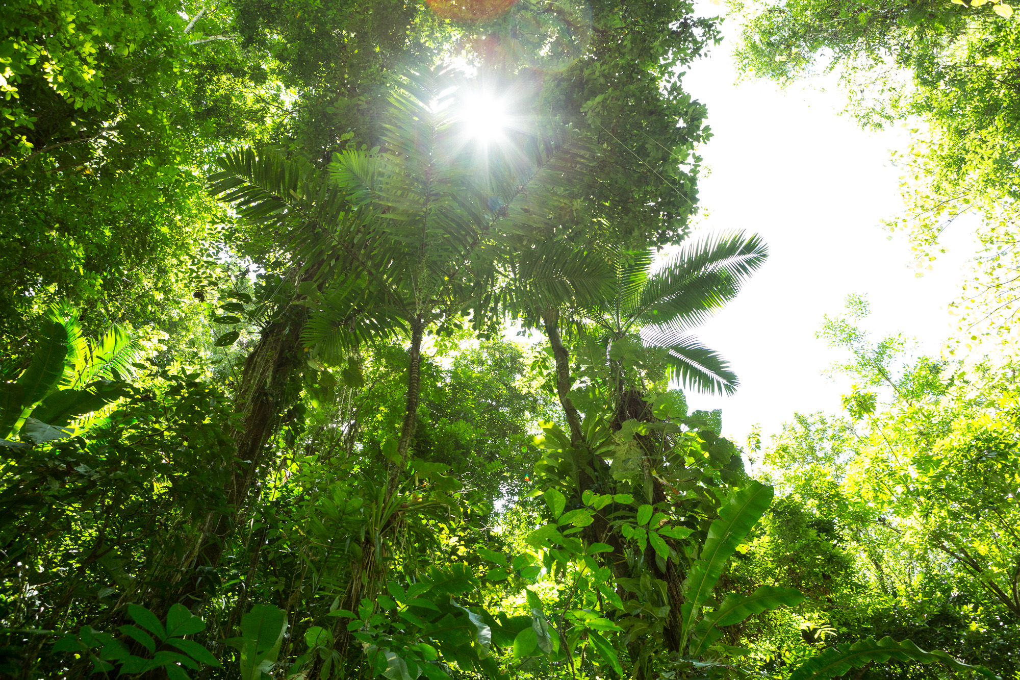 Jungle VI, 2013