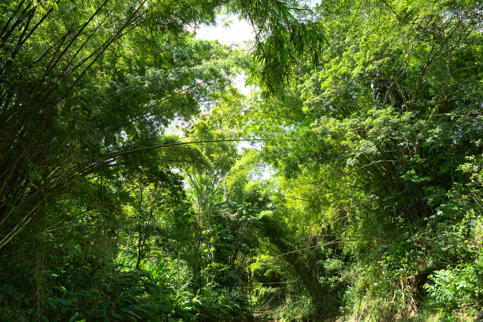Jungle V, 2013