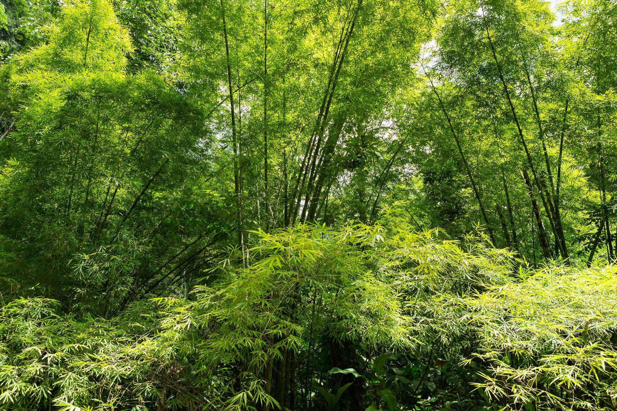 Jungle VII, 2013
