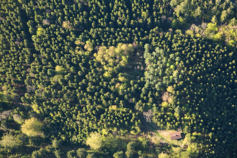Treetops III, 2016 //  80 cm x 120 cm