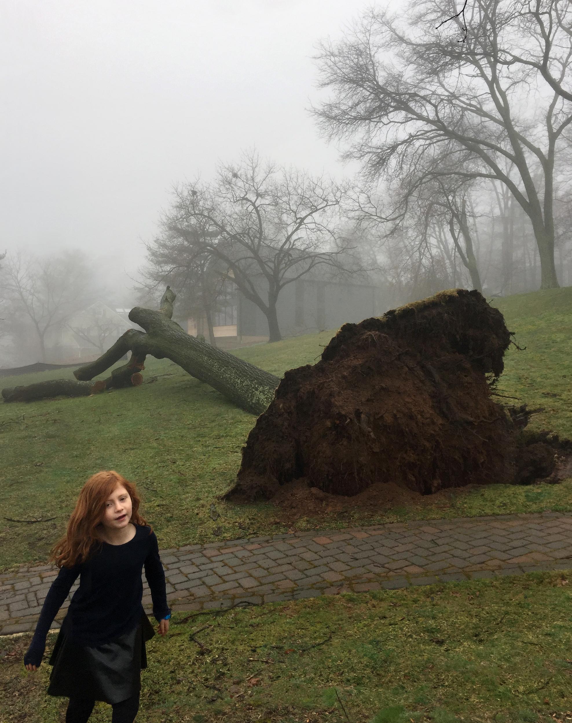 Fallen Tree, Snaps
