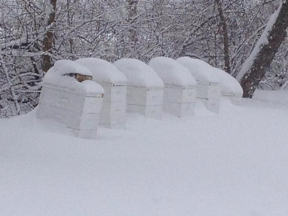 Hives after a blizzard in 2014
