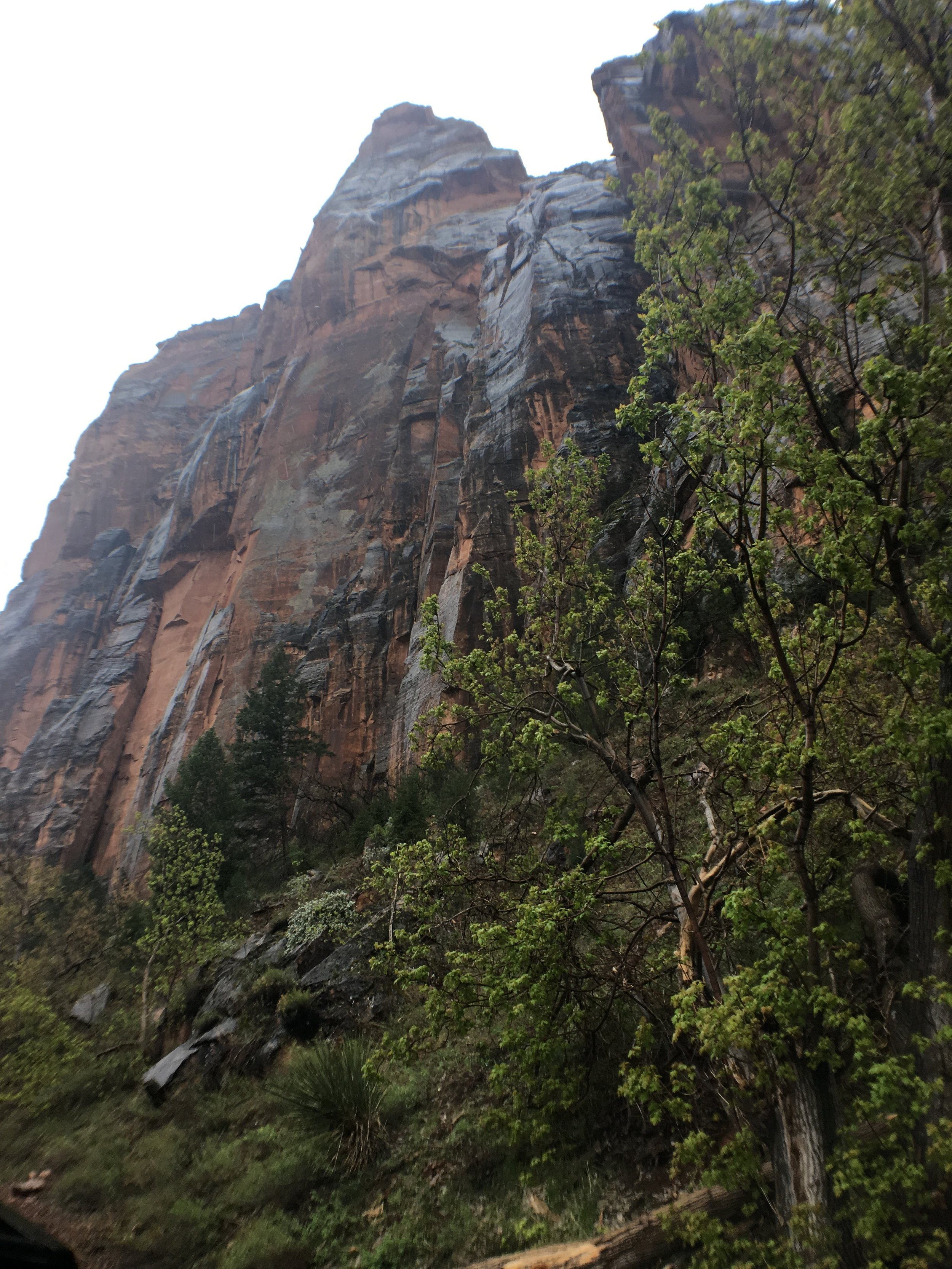Such tall rocks at Zion
