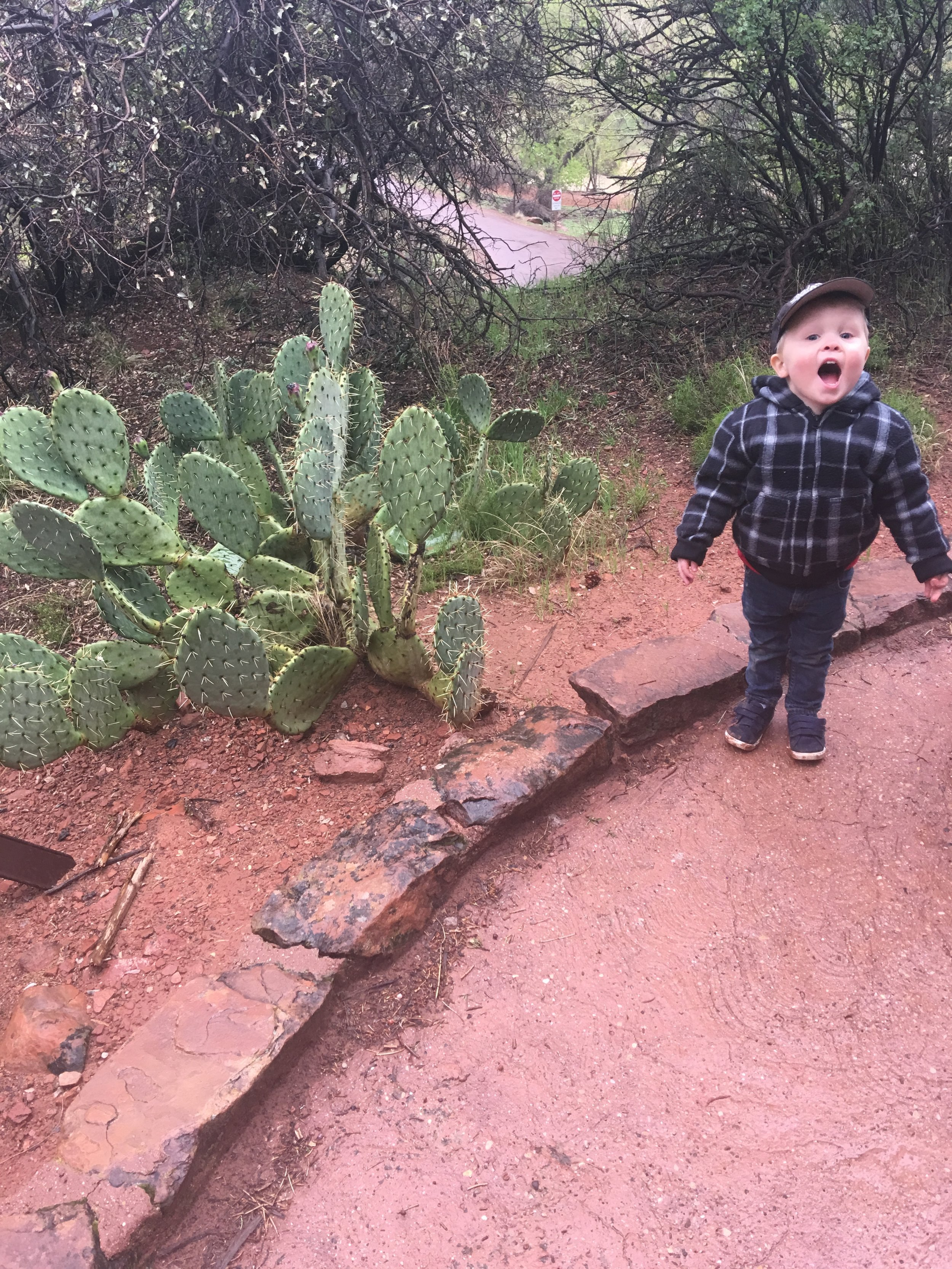 He was pretty excited to see a cactus