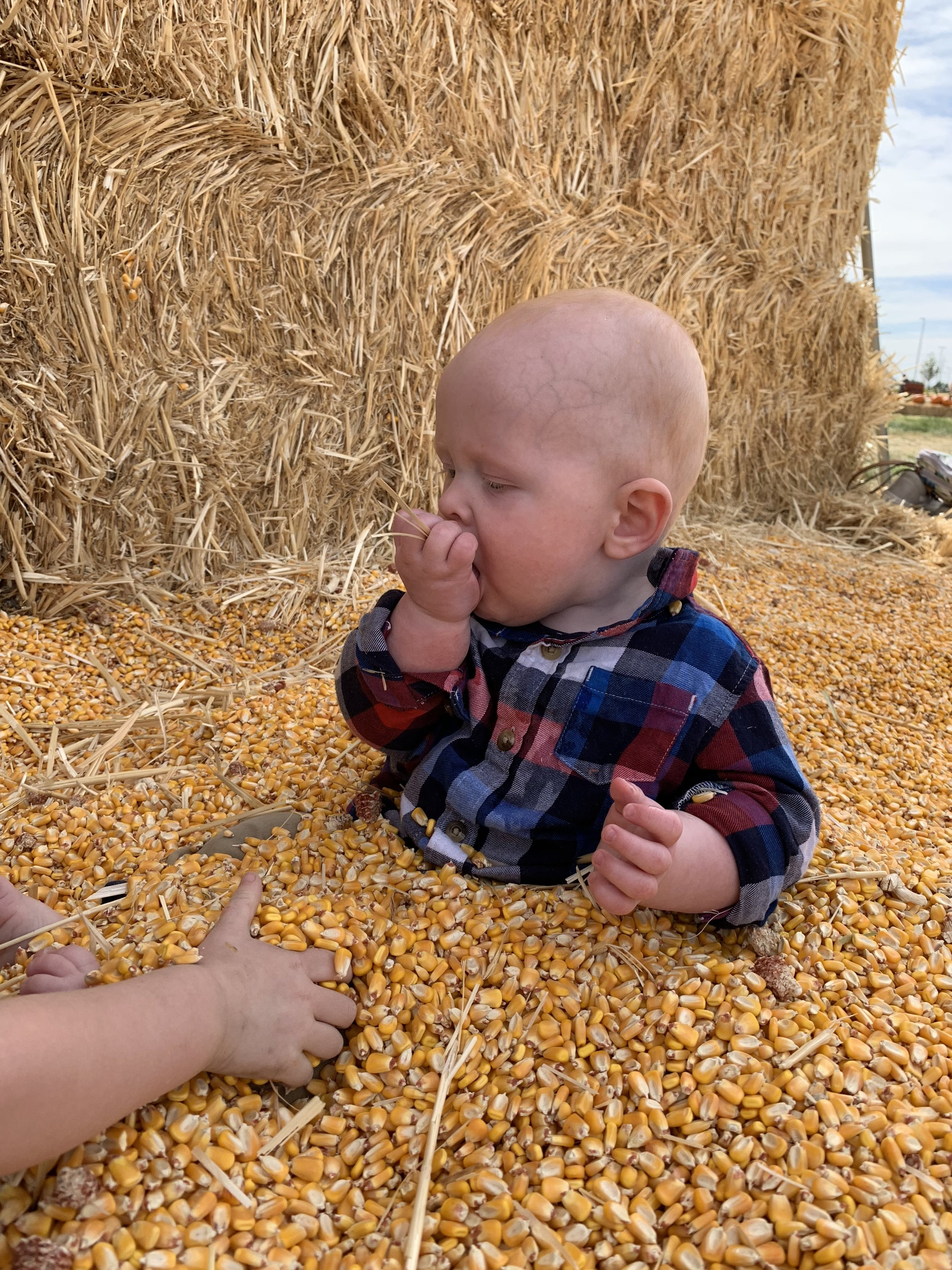 There's just nothing quite like the taste stale corn! (Don't worry, I made sure none got into his mouth!)