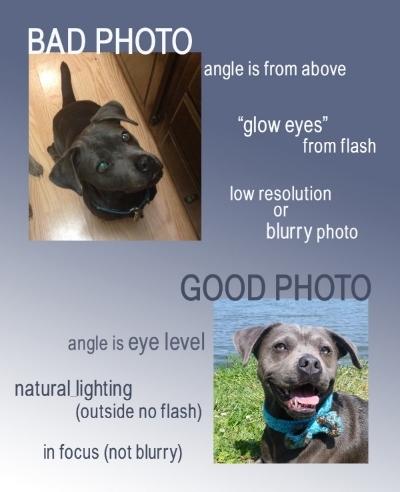 Good Pet Photo