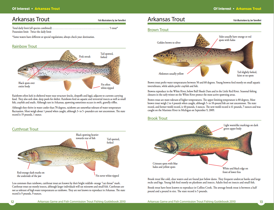 Arkansas Game and Fish Commission's Trout Species Guide