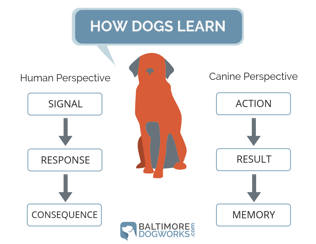 Dog Behavior Primer Infograph.png