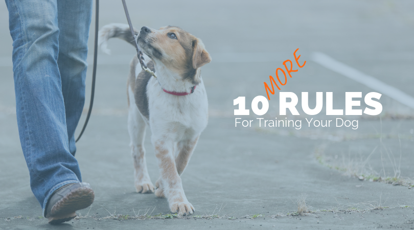 10 Rules for Training Your Dog (1).png