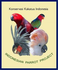 indonesian-parrot-project.jpg