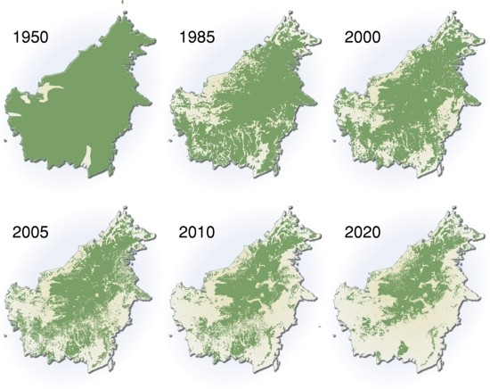 The image above shows the forest cover projections on the island of Borneo, our target area.   840,000  hectares of forest were lost in Indonesia in 2012 alone.  Indonesia has the  fastest rate  of deforestation in the world.