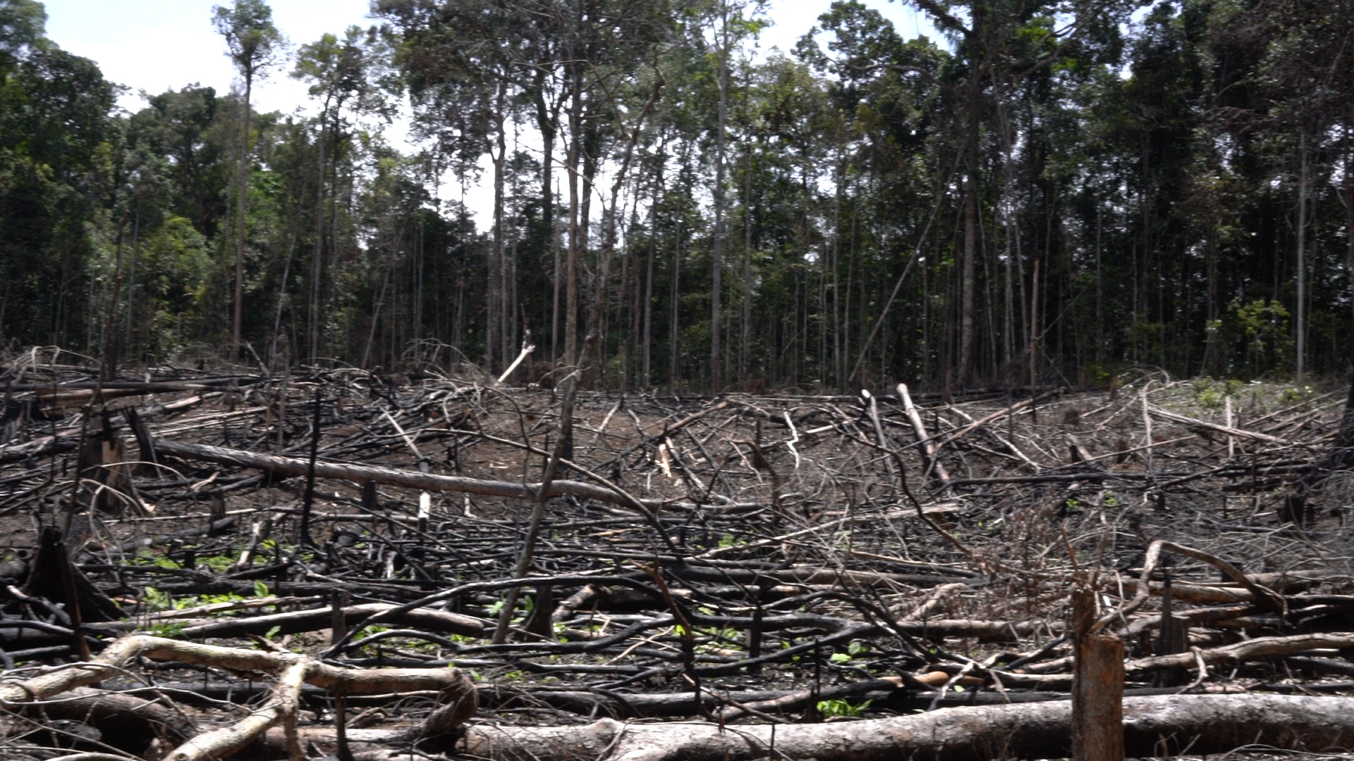 A site where the trees have been burnt and chopped down in the nature reserve.