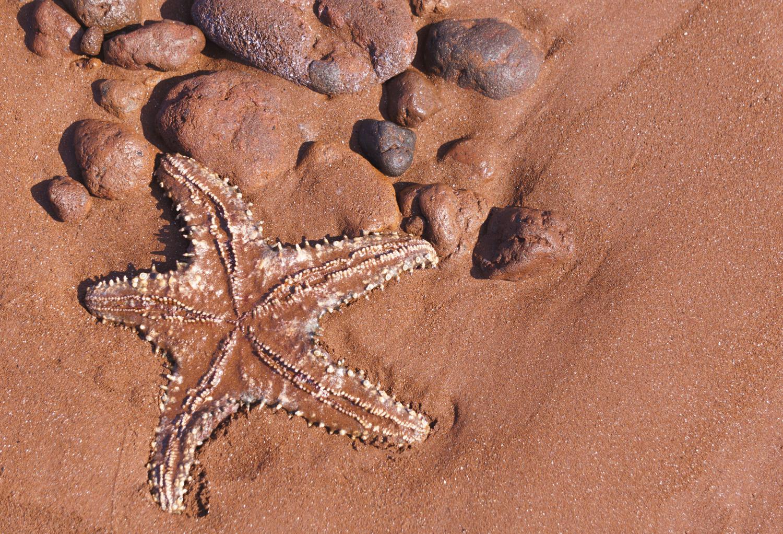 starfish (1 of 1).jpg