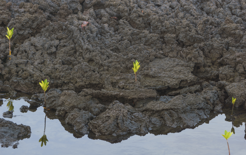 lavaplants (1 of 1).jpg