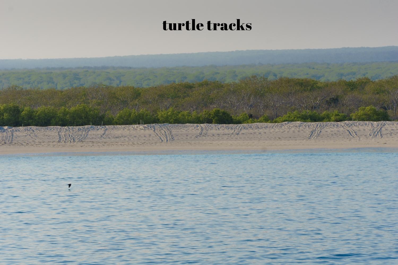 turtletracks (1 of 1).jpg