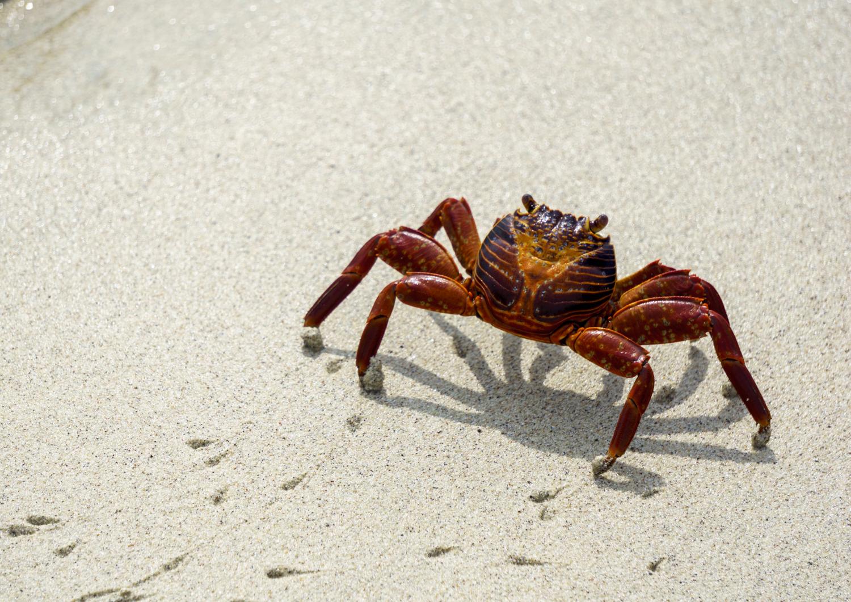 crabonsand (1 of 1).jpg