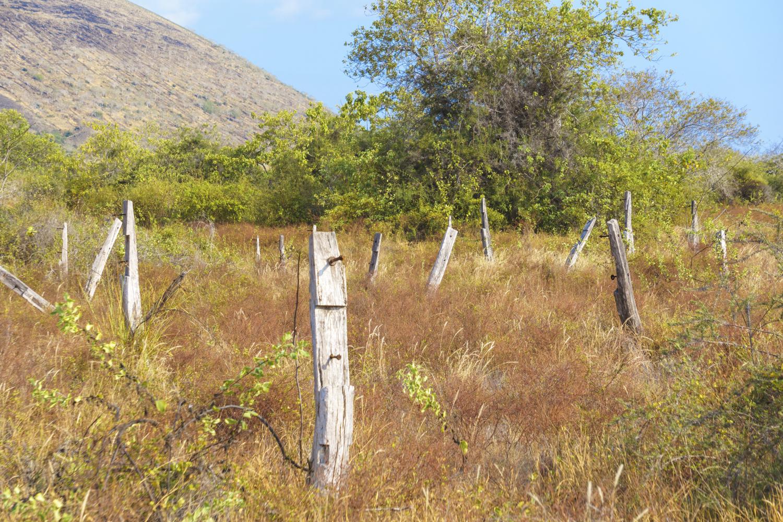 birdandhill (2 of 2).jpg
