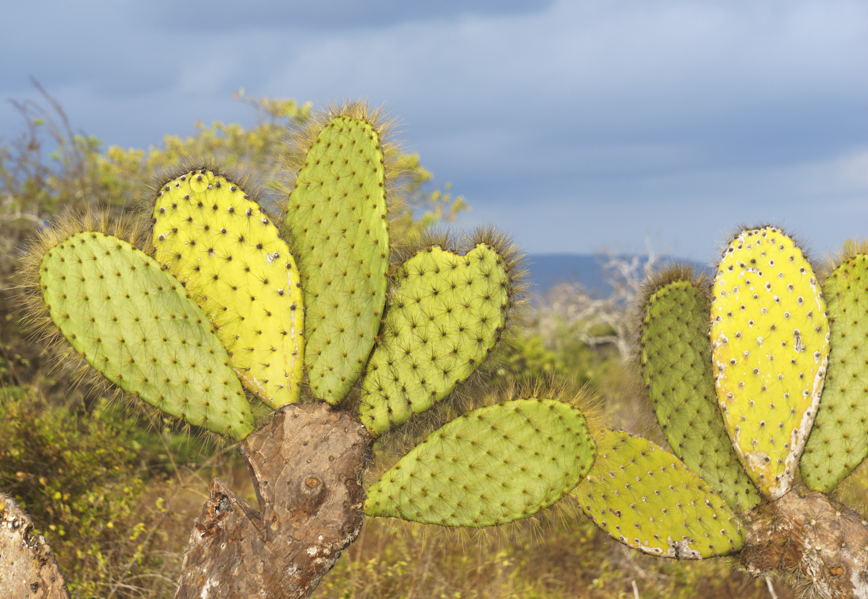 cacti (1 of 1).jpg