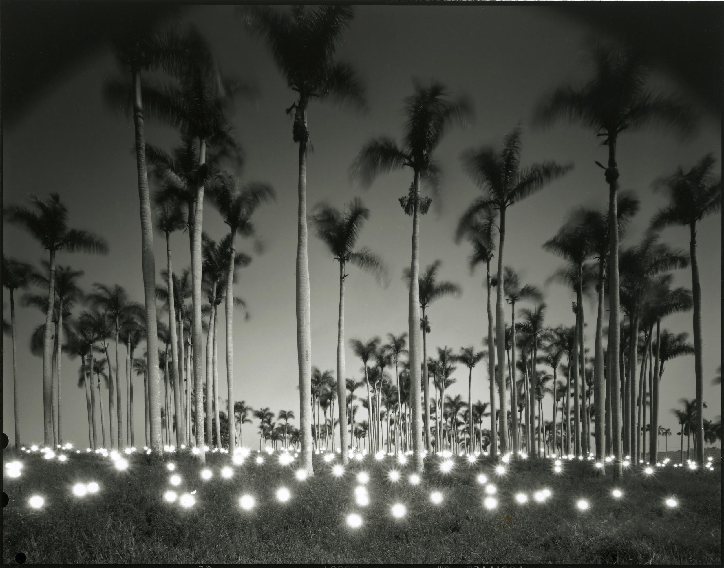 ts.Palm #356.jpg