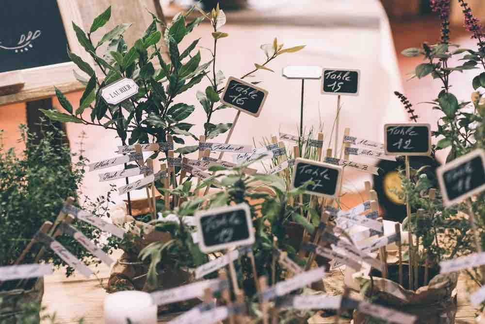 Chalkboard Signs and Plants as Table Plan