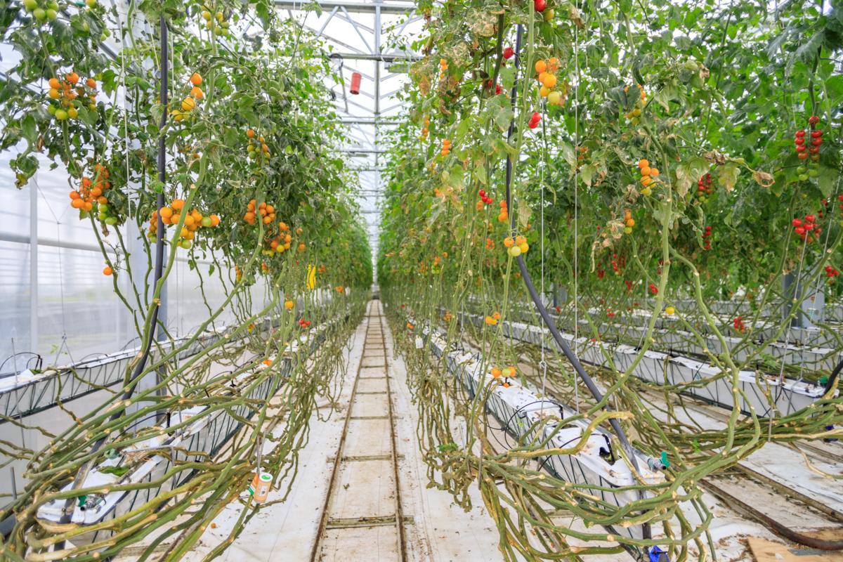 Urban Farmers | Den Haag