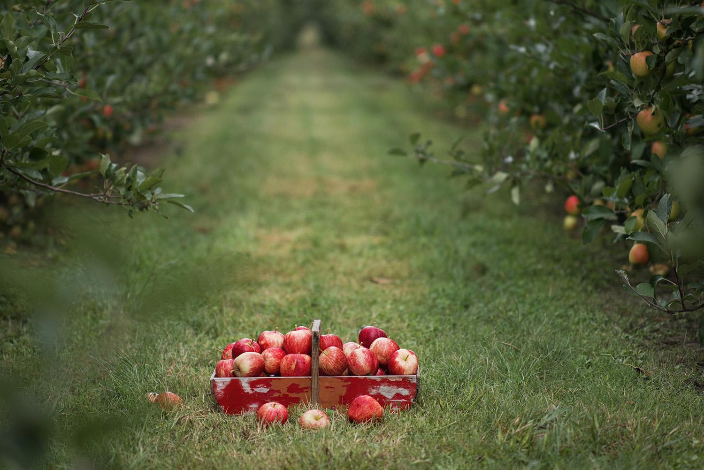 apple press 4.jpg