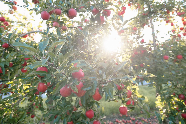 apple press 2.jpg