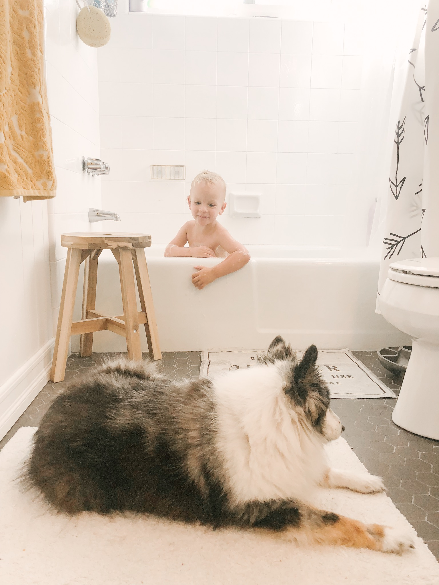 toddler and his sheltie dog.JPG