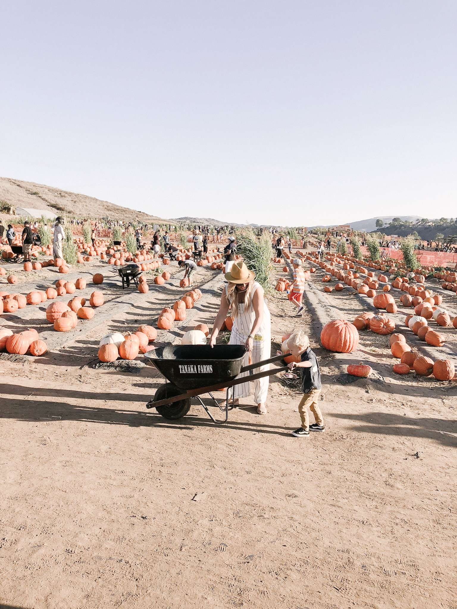 tanaka farms pumpkin patch wheelbarrow.JPG