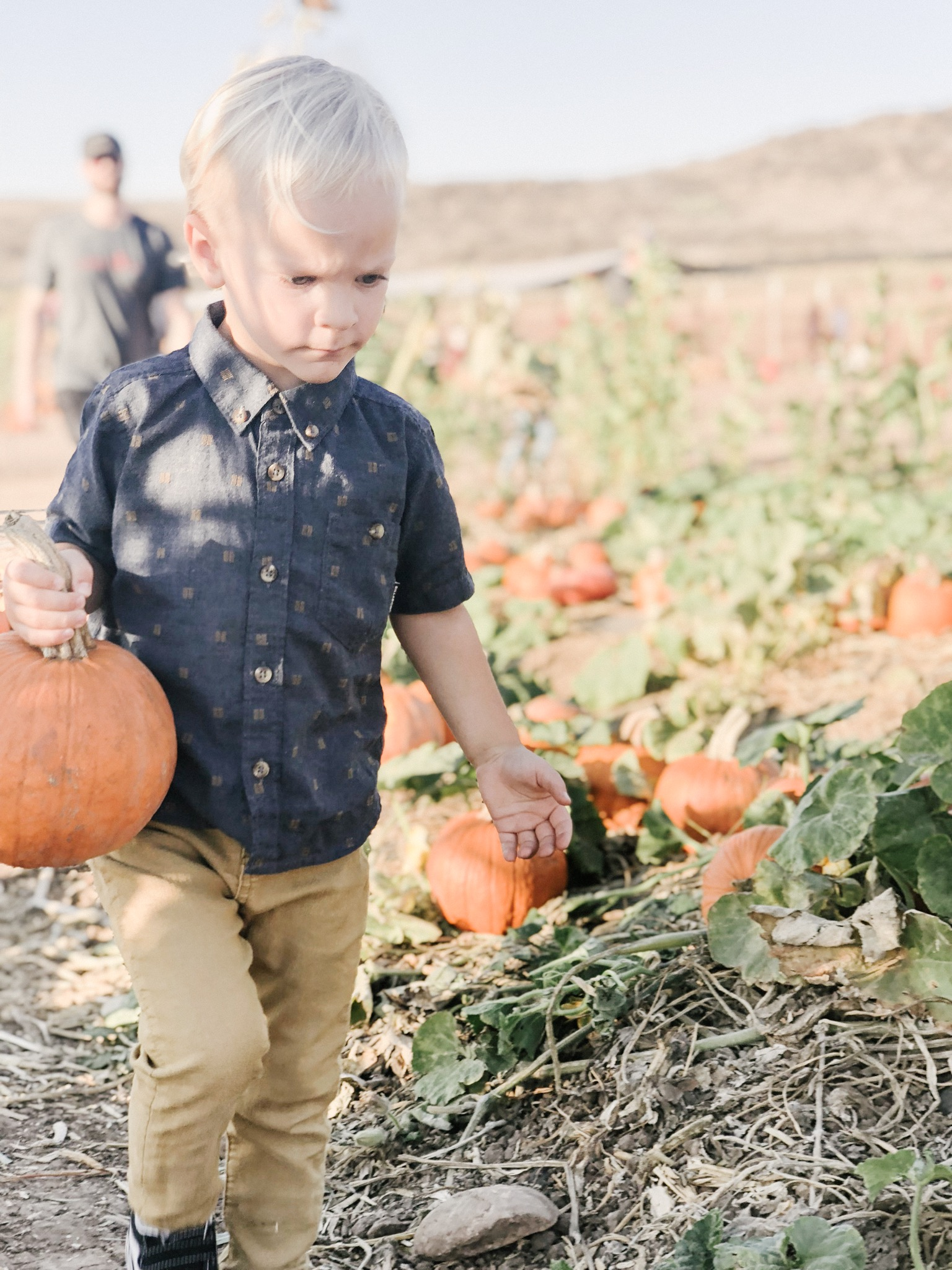 tanaka farms pumpkin patch2.JPG