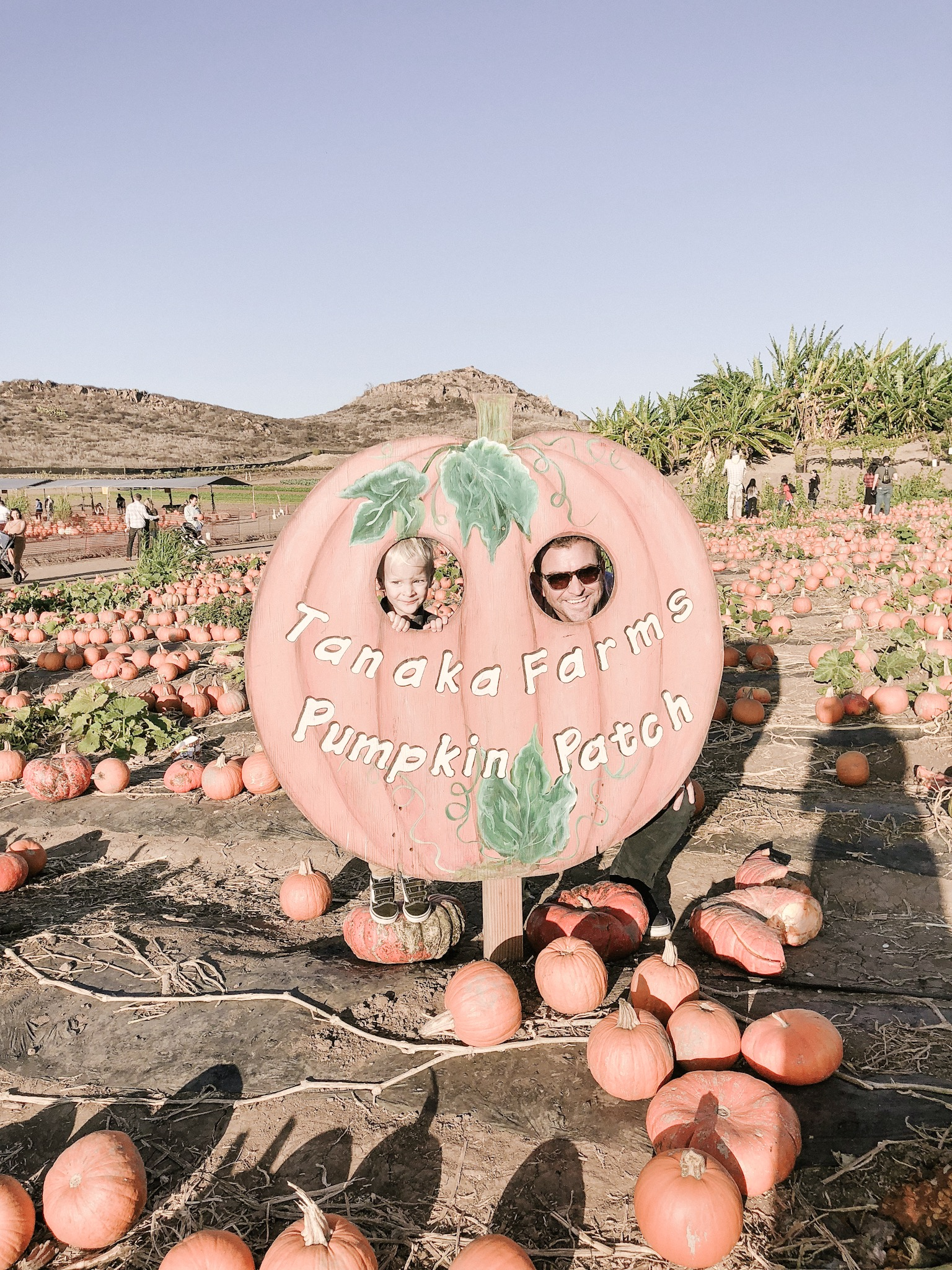 tanaka farms pumpkin patch.JPG