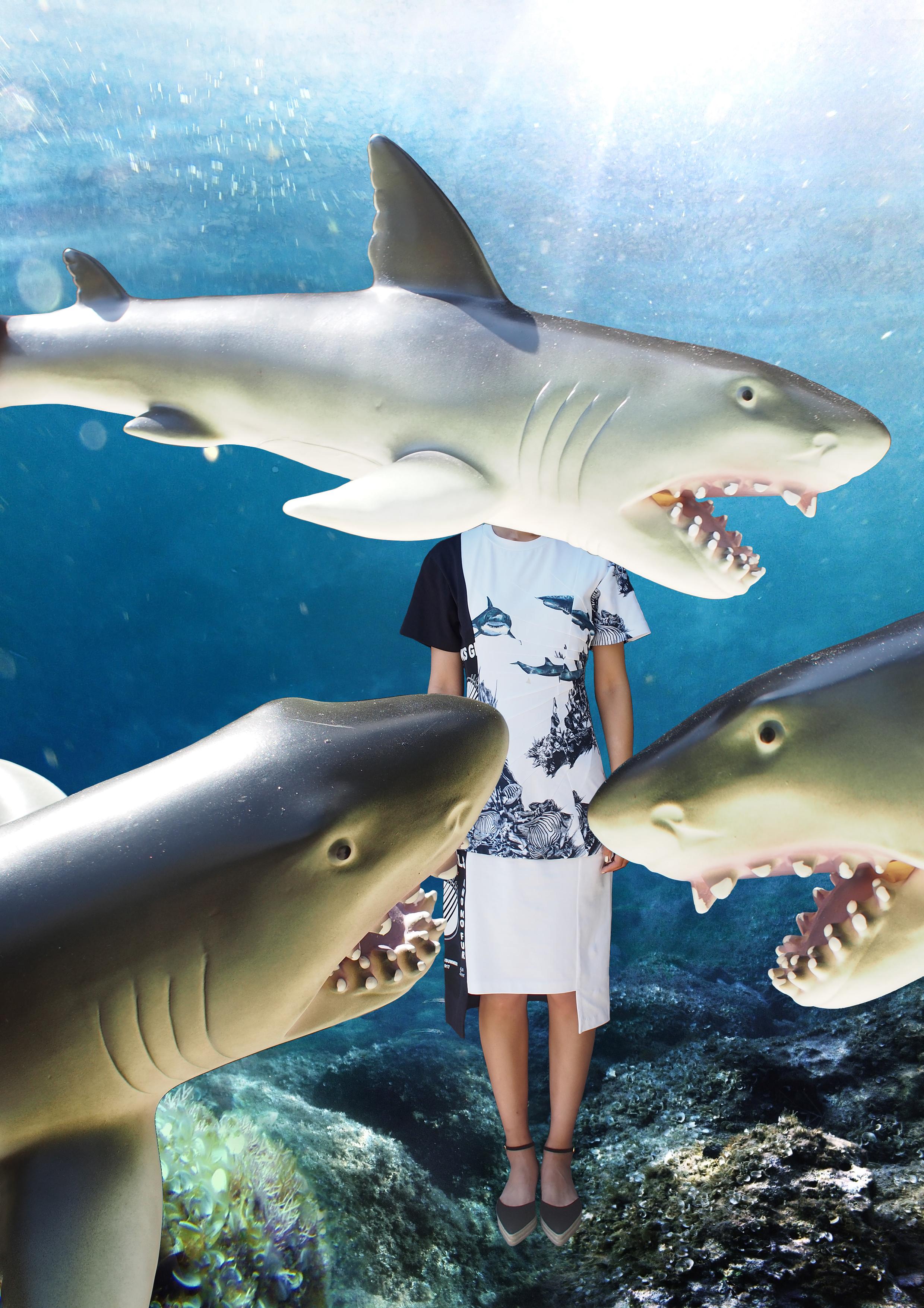boboli-shark-week-1.jpg