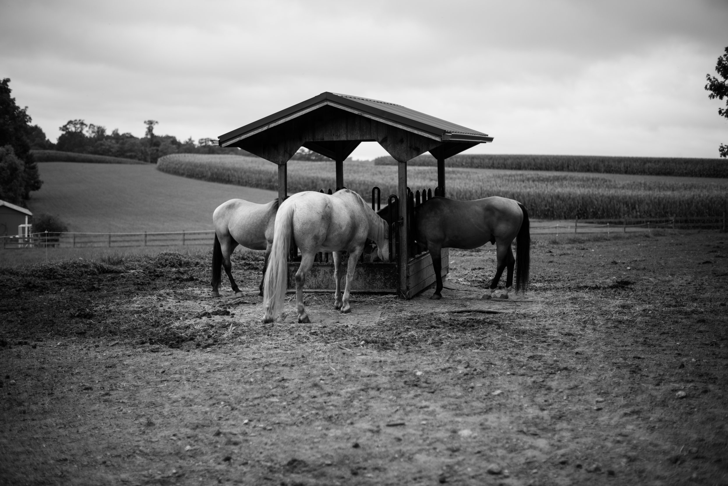 farmgirls-11.jpg
