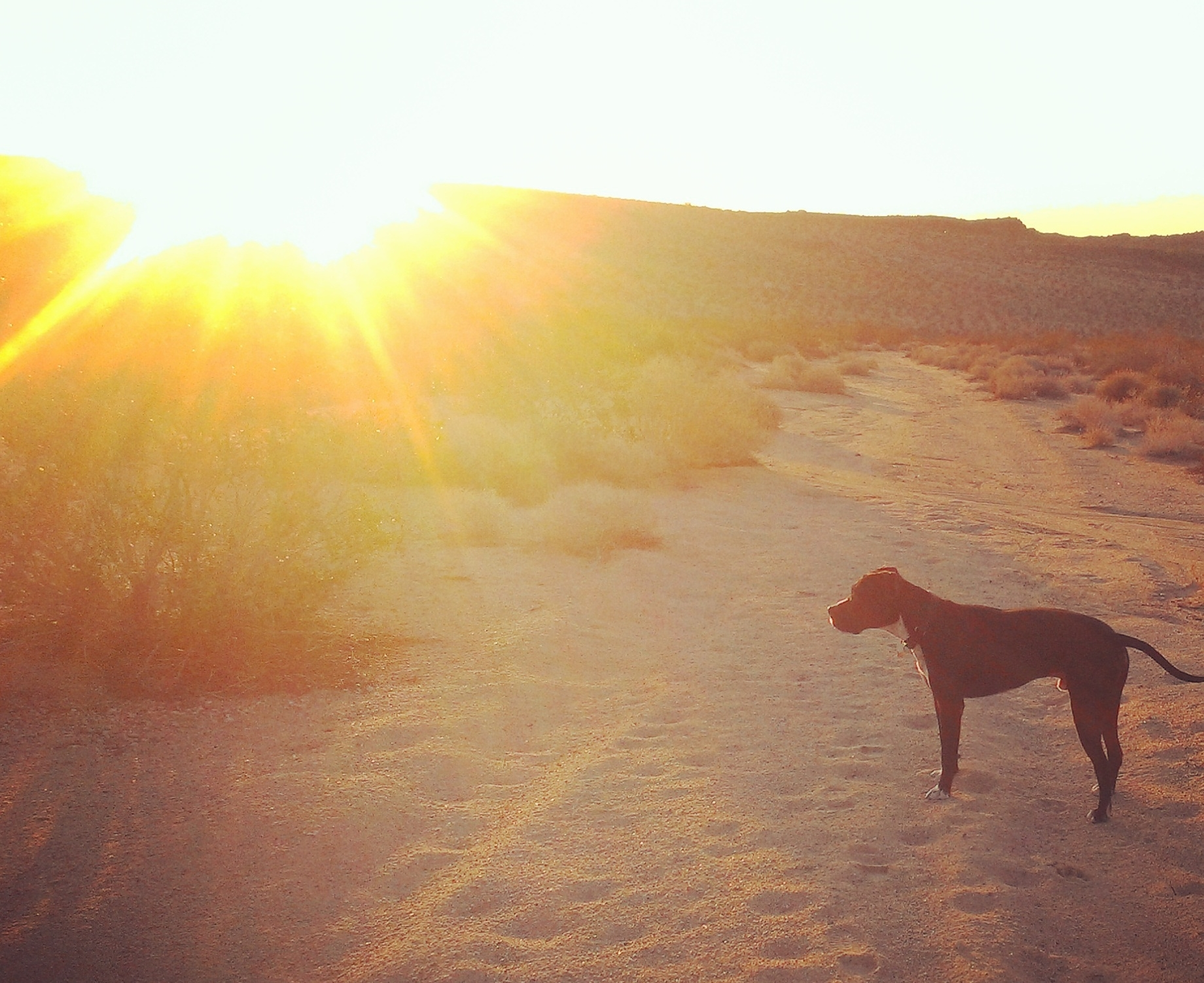 Bodhi at daybreak, photo by me