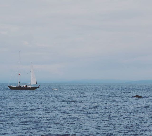 Happy 75th Mom! For you, one of my favs... A humpback whale peeking out of the water and sailboat.
