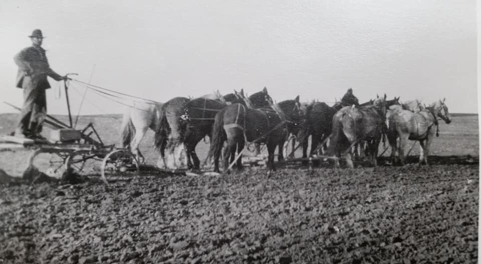 Plowing the fields of the homestead near Highwood