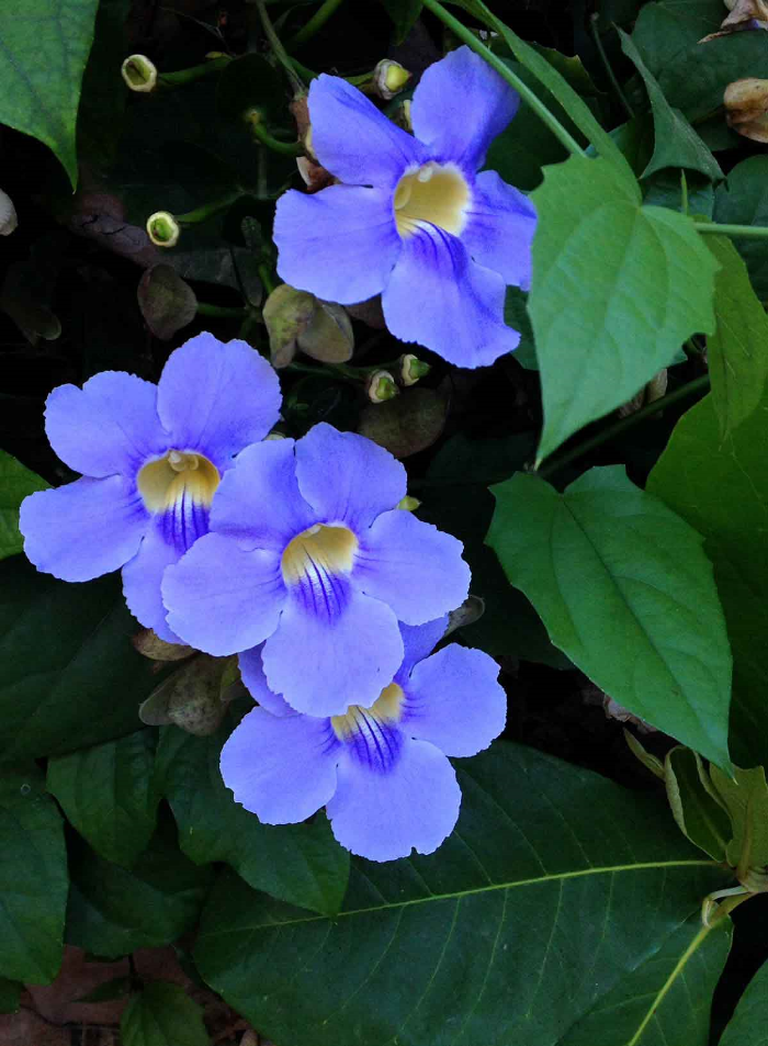 Flowers in Bucerias