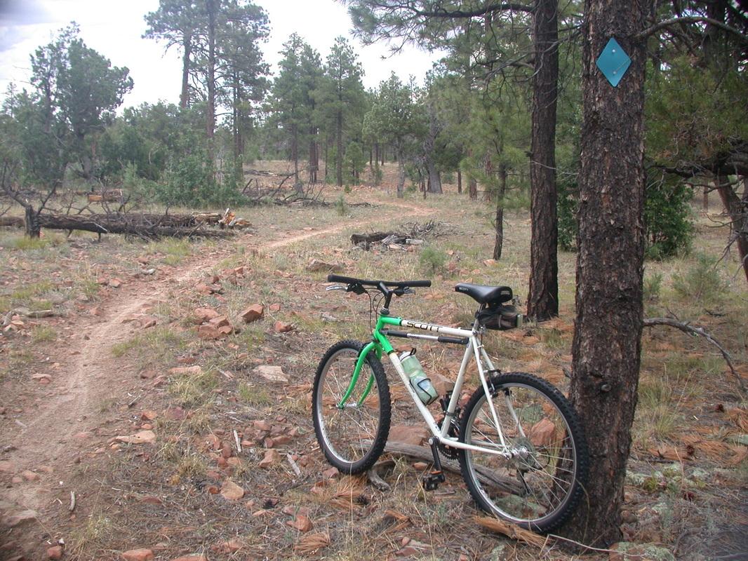 Ponderosa Pine Forest. Photo from  biketouring.com
