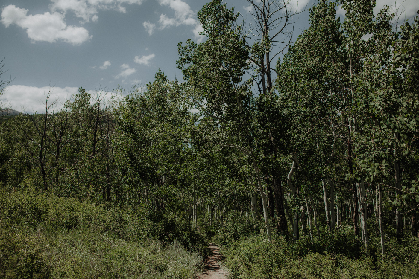 woods-walk-trail-crested-butte-colorado-wedding-24.jpg
