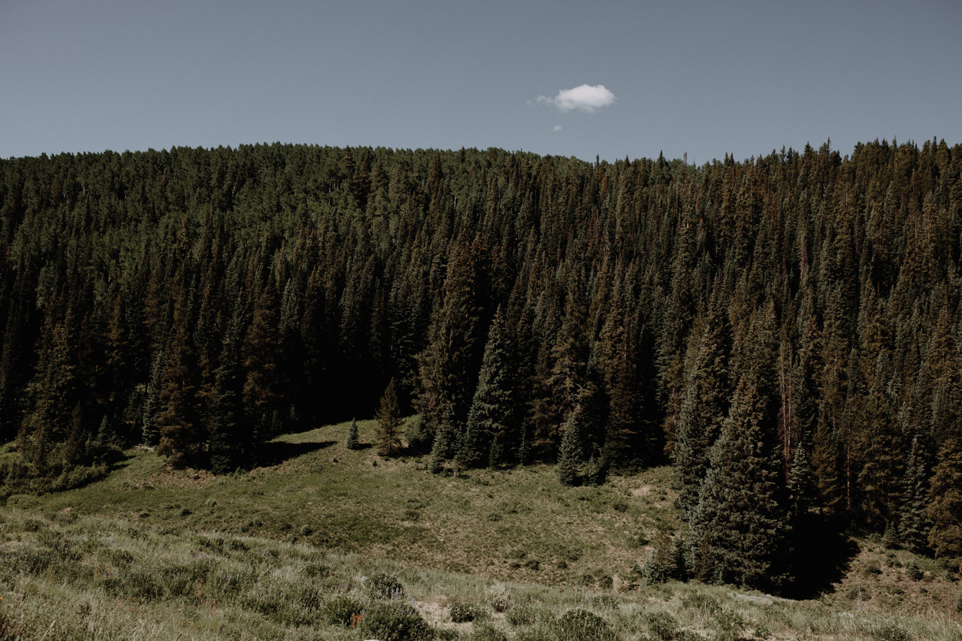 woods-walk-trail-crested-butte-colorado-wedding-31.jpg