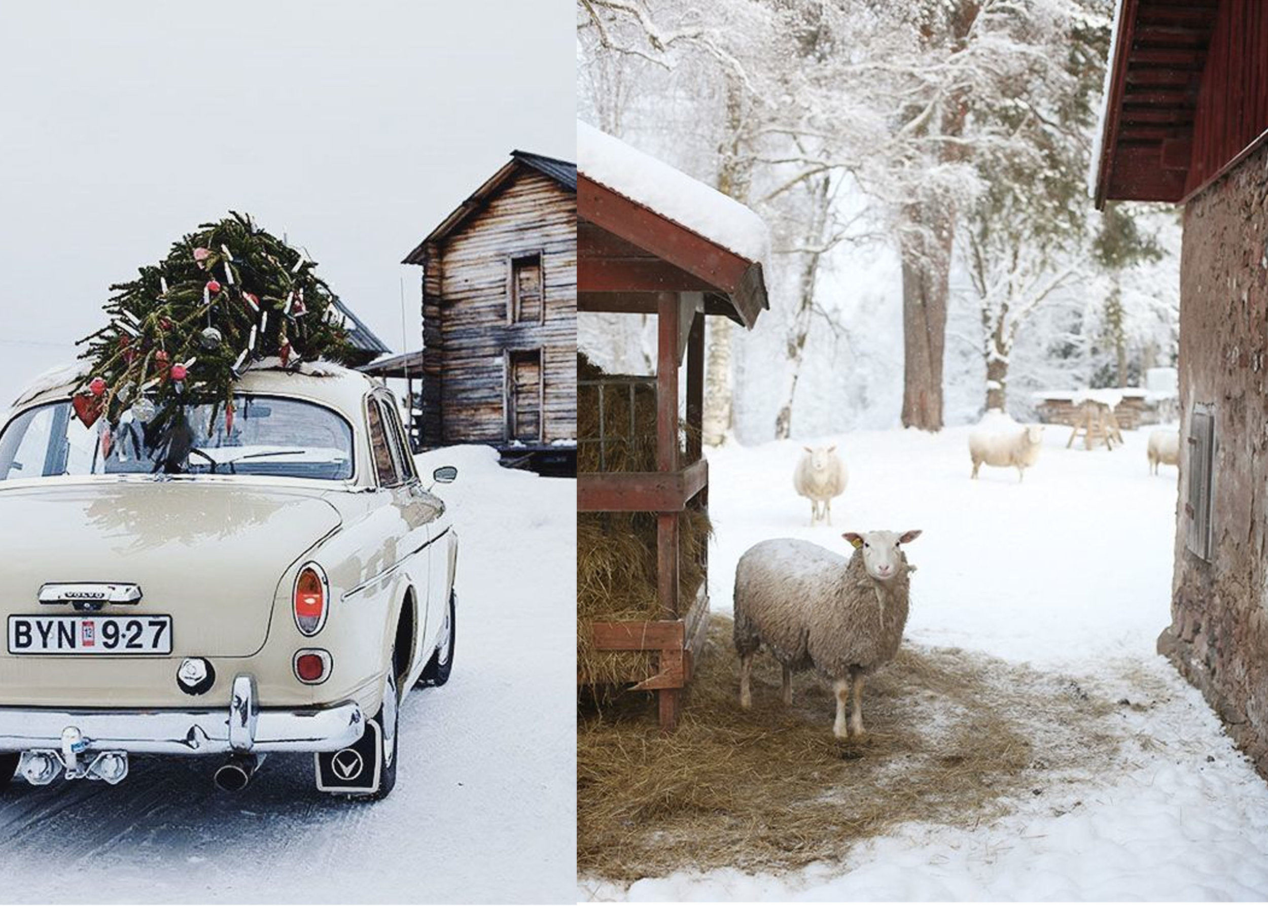 image car and tree via  This is Glamorous  - image with sheep via  Pinterest